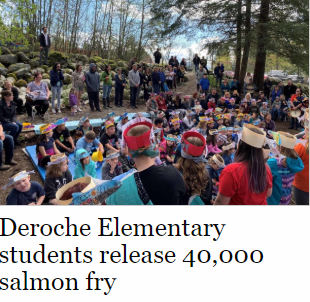 Salmon Release - News Article.png